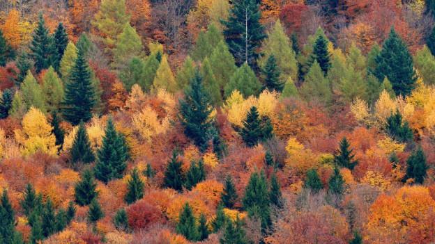 Ein undurchdringlicher Wald ...