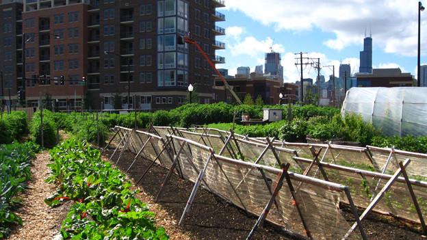 Eine «Urban Farming»-Anlage in Chicago.