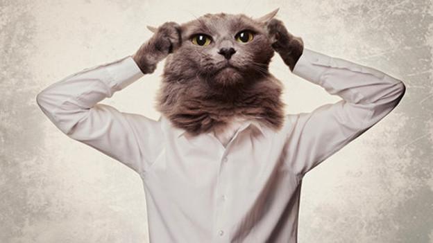 Menschenkörper mit Katzenkopf.