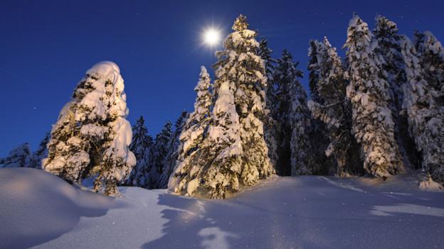 Verschneiter Tannenwald mit hell leuchtendem Mond.