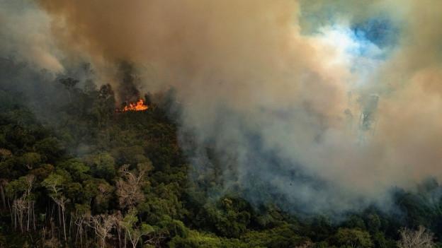 Aufsteigender Rauch, Wald und Brandherd
