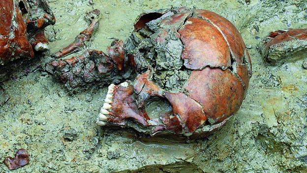 Auch gruslige Funde zeigt die Ausstellung: Abgetrennter Schädel einer Frau aus Mormont.