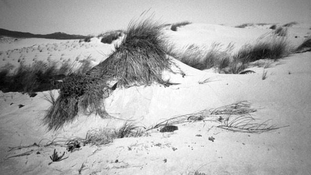 Eine Aufnahme in den Sanddünen an der Atlantikküste von Portugal.