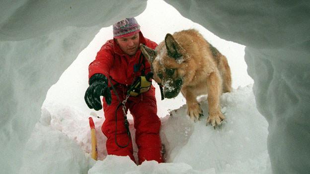 Sie retten Leben: die Lawinenhunde.