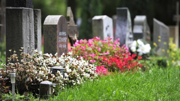 Eine Grabreihe auf einem Friedhof.