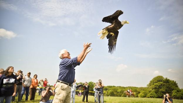 Ein Mann lässt einen Adler davon fliegen.
