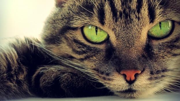 Katzenkopf mit offenen Augen.