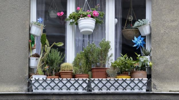 Ein Fenstersims mit verschiedenen Pflanzen.