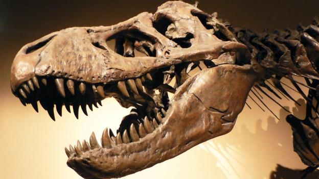 Dinosauriereskelett