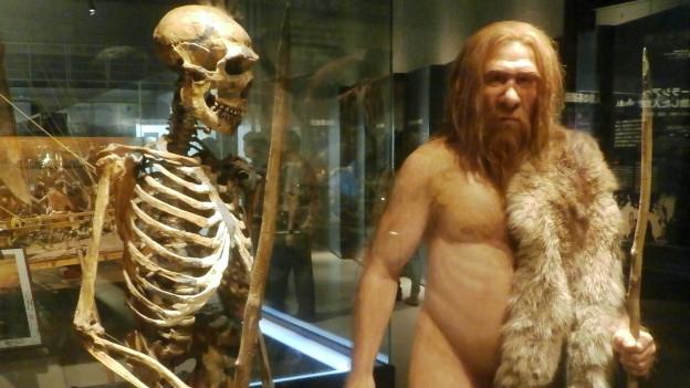 Ein Skelett steht neben dem Modell eines bärtigen Mannes mit Fellumhang