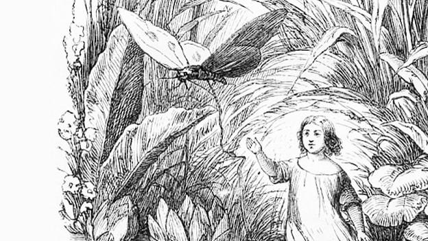 """""""Däumelinchen"""", gezeichnet von Andersens erstem Illustrator Vilhelm Pedersen."""