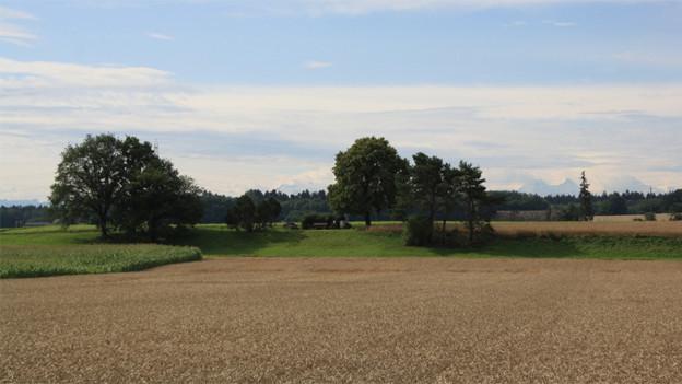 Landschaft mit Feldern und einzelnen Bäumen