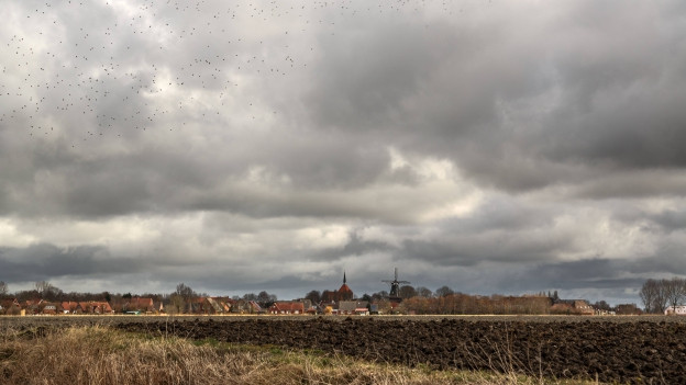 Starenschwarm über einem Dorf im Ostfriesland.