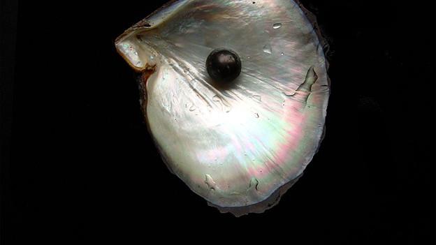Muschel mit schwarzer Perle.
