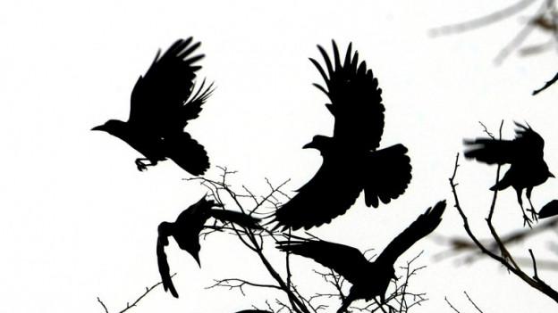 Krähen auf einem Baum.