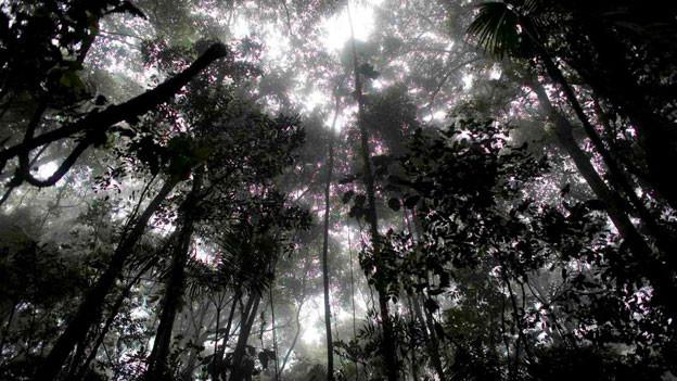 Regenwald im Guatopo Nationalpark, Venezuela.
