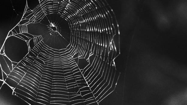 Spinnennetz in schwarz-weiss.