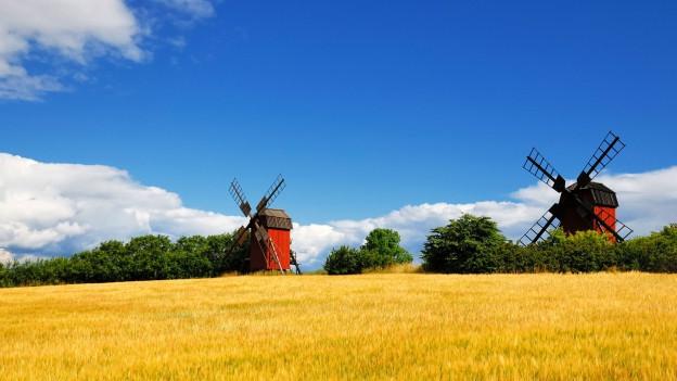 Landschaftsbild der Insel Öland in Schweden, mit roten Windmühlen und gelben Felder.