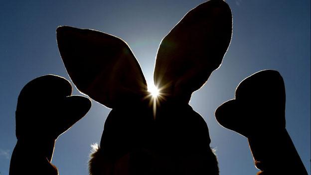 Grosse Ohren haben sie und trommeln können sie auch