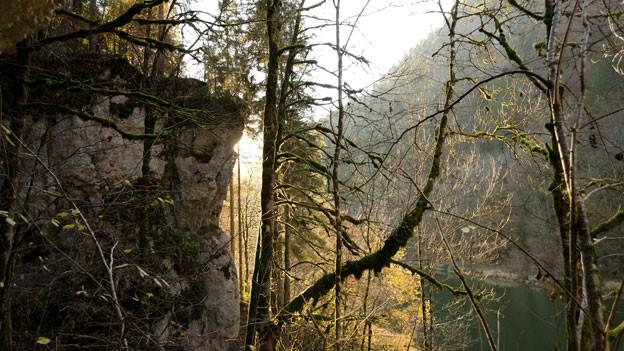 Ansicht mit Felsen, Bäumen und einem Fluss im Hintergrund.