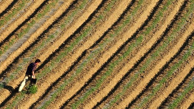 Symbolbild: Tomatenfeld in Griechenland