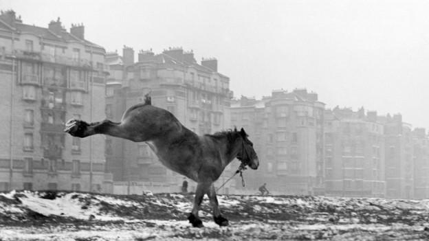 Porte de Vanves, Paris, 1951.