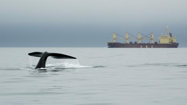 Ein Schiff im Hintergrund, eine Walflosse im Vordergrund
