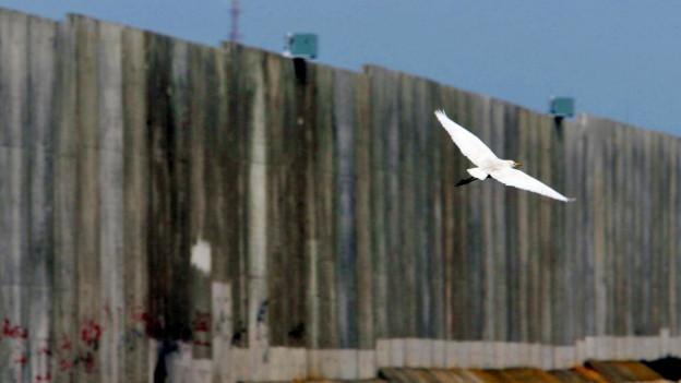 Eine Möwe fliegt vor einer Mauer vorbei.