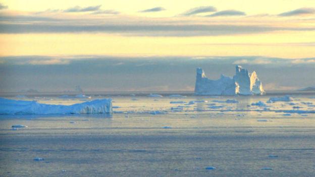 Um in diesem Eis zu überleben, brauchen Tiere ganz besondere Fähigkeiten.