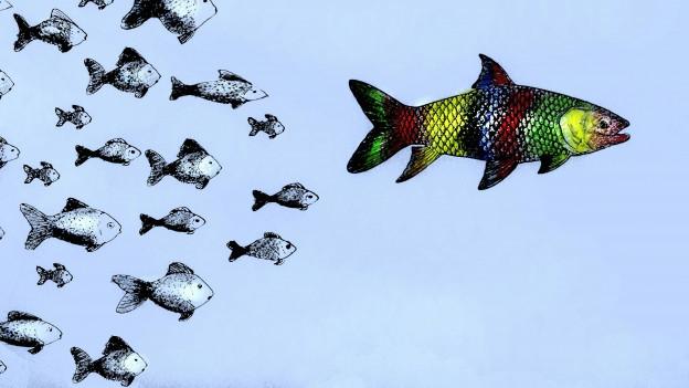 Kleienr Fisch, grosser Fisch.