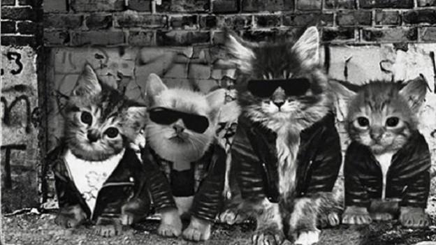 Zumindest heute lustig: Da hat einer Plattencover mit Kätzchen nachgebaut. Ramones, purrr.