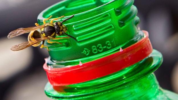 Treibstoff für Wespen ist alles, was Zucker enthält.