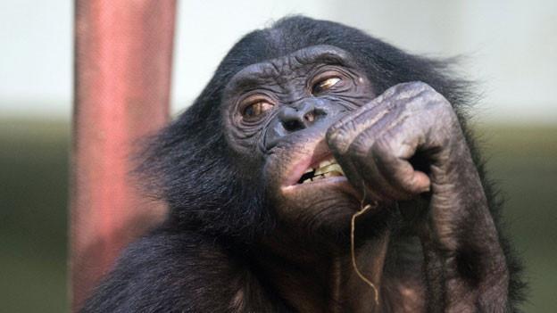 Das sagen Promis zu Ueli Maurers «Aff».