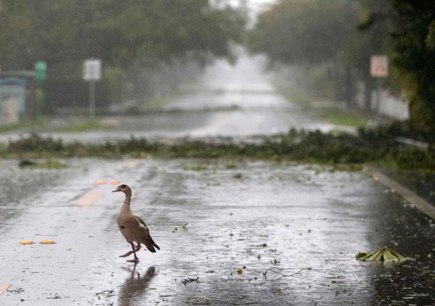 Hurrikan Irma hat nun den US-Bundesstaat Florida erreicht, bereits gibt es Berichte von Schäden.