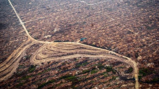 Nestlé will mit Satelliten beobachten, welchen Einfluss Palmöl-Plantagen auf Regenwälder in der Umgebung haben.