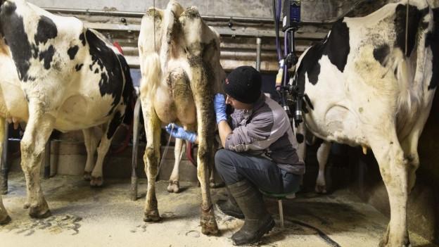 Macht's die Milch noch?