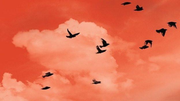 Annabel Pitcher: Ketchuprote Wolken (Goldmann)