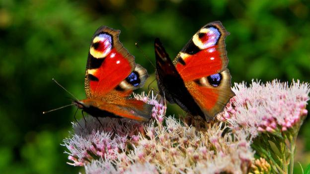 Schmetterlinge Im Bauch Gefühl