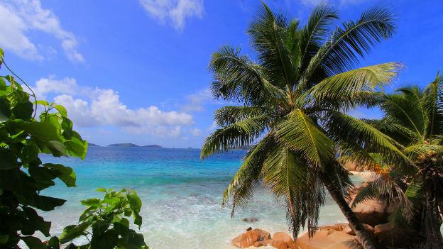 Meer, Sandstrand und Palmen