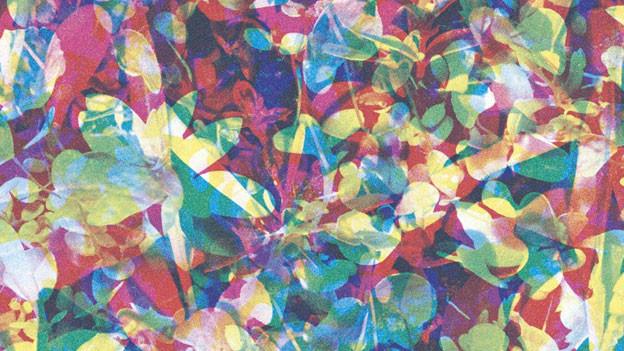 Das farbenfrohe Cover von Caribou