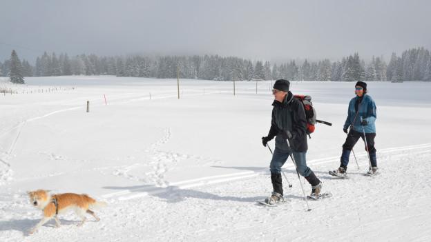 Auch Schneeschuhläufer samt Hundeli fühlen sich wohl auf dem Balcon du Jura vaudois.