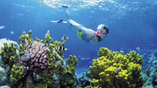Das Great Barrier Reef ist Australiens Tourimusmagnet.