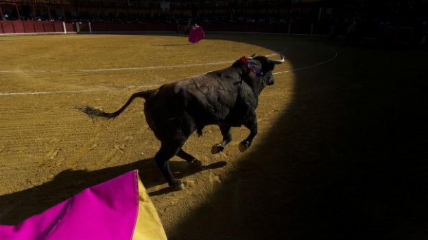 Trotz sinkender Zuschauerzahlen: Stierkampf soll geschützt werden.