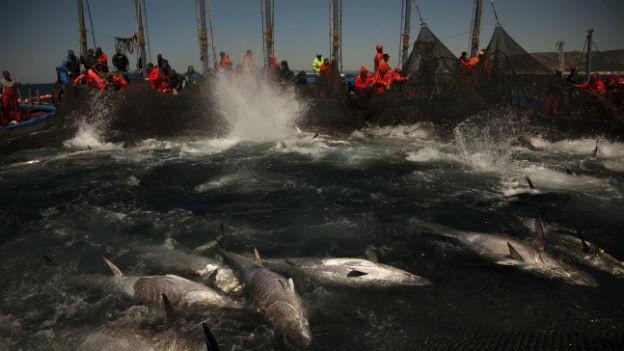 EU-Staaten wollen Beifang-Quote der Fischer verringern