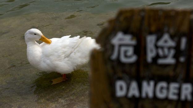 Vögel als Übertrager von H7N9.