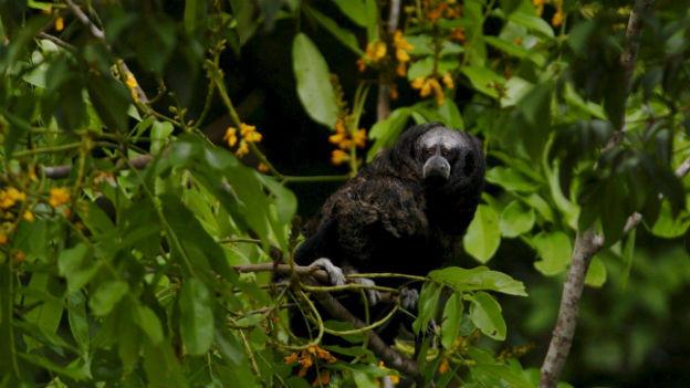 Jeden Tag verschwinden weltweit 150 Tier- und Pflanzenarten.