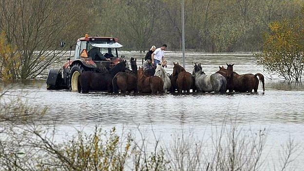 Hochwasser der Maas nahe der niederländischen Stadt Beesel, im November 2010.
