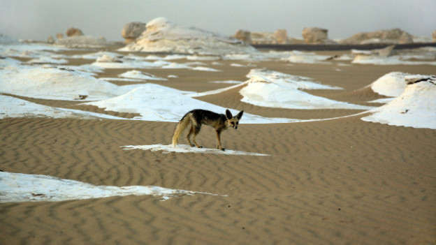 Sahara: einst ein beliebtes Touristenziel. Heute ist die Sahara für westliche Ausländer eine gefährliche Region.