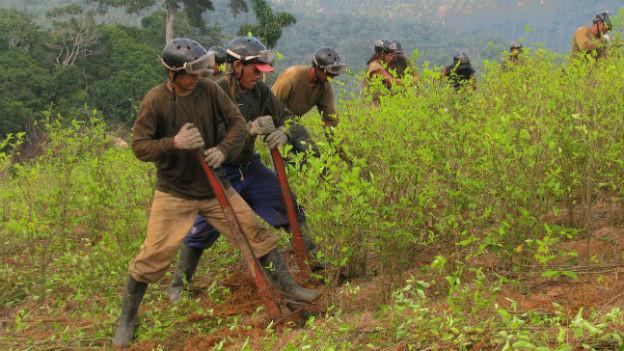 Kaffee und Kakao als Alternative zum Koka-Anbau in Peru