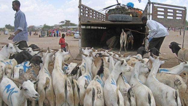 Viehmarkt in Somaliland
